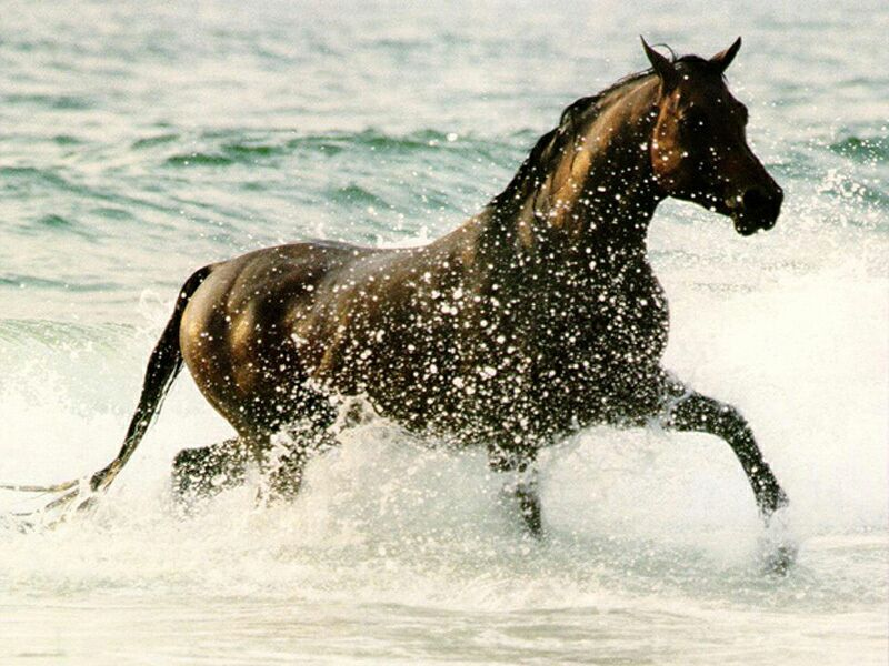 joyeux aniv' helo dans AMIES ani_chevaux2