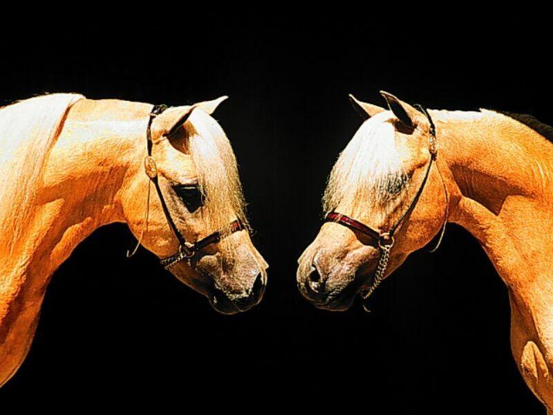 0oo ...photo poutch...oo0 Ani_chevaux3
